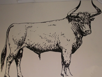 Full scale drawing of aurochs on wall of Porlock Visitor Centre